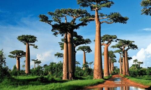 visa long séjour Madagas