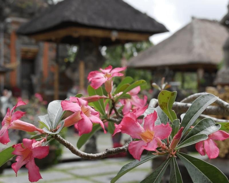 visa socio-culturel Indonésie