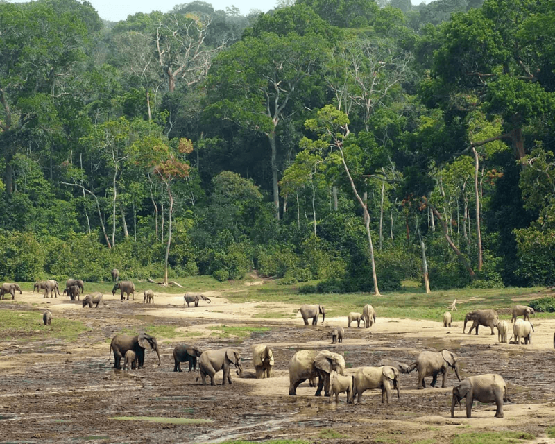 visa tourisme Gabon