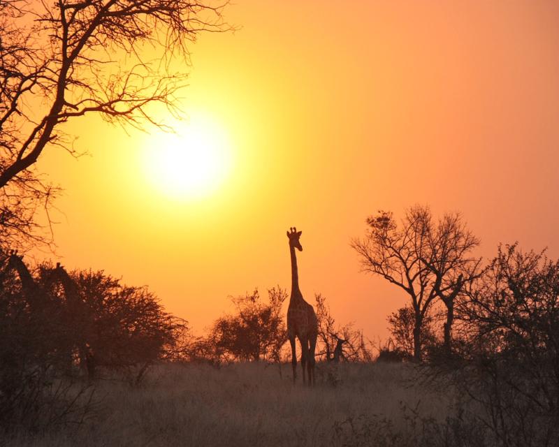 E-Visa pour la Zambie